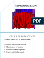 5. Cell Cycle and Mitosis.ppt