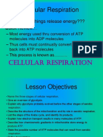 12. Powering the Cell-Cellular Respiration