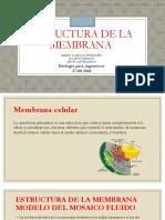 Estructura de La Membrana