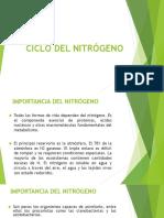 CICLO-DEL-NITRÓGENO-ecología.pptx