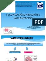 Fecundación, Nidación e Implantación anyelo