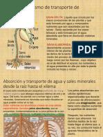 11 Nutricion Plantas LEONELA