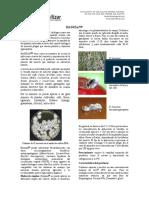 BASSIAN - INFORMACION TECNICA.pdf