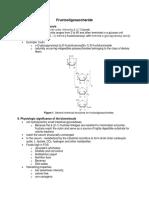 Fructooligosaccharide Outline