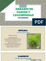 Herbario de Pastos y Forrajes 1