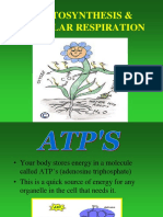 PHOTOSYNTHESIS  CELLULAR RESPIRATION NL jd 1.ppt