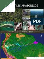 HUMEDALES AMAZONICOS.pdf
