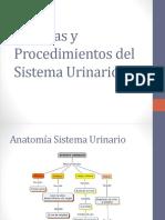 11. Sistema Urinario