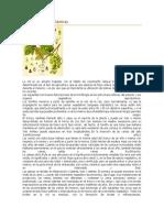 Características botánicas INTEGRADORA.docx