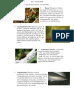 SELVA PERUANA Informe de Recursos