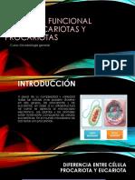 Anatomia Funcional de Procariotas y Eucariotas
