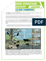 Ciclo Del Carbono 2 Para Primero de Secundaria