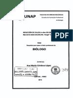 T-631.535-C77.pdf