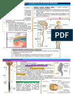 1 Introducción y Organización de Sistema Nervioso