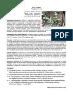 Pelargonium Zonale-Fabian Daza.docx