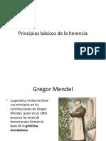 Principio s Genetic A
