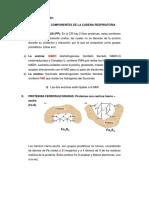 Componentes de La Cadena Respiratoria.docx Bioqyuimica Magdalena