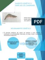 Diapositivas Crustaceos Enfermedades de El Camaron
