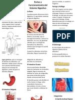 sistema digestivo expo.docx