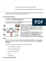 Sistema Endocrino Clase 1