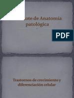 2do Rote de Anatomía Patológica Práctica