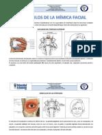 Músculos de La Mímica Facial