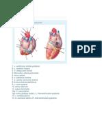 elearning Jantung dan pembuluh darah.docx