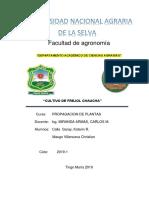 INFORME DE FRIJOL.docx