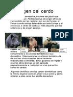 El Origen Del Cerdo