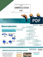 snc embriologia