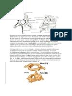 Las Vértebras