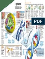 Infographie Carrefour - Au Coeur de Nos Cellules (Pages 2 Et 3) - Novembre 2000
