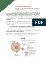 Estructura de Los Ribosomas