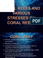 Coral Reefs and Various Stresses on Coral Reefs
