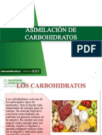 Asimilación de Carbohidratos