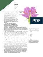 Basic Parts Flower 1