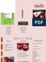 Ayelin Noh Apple Brochure