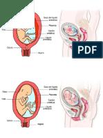 fetos 4 y 5 mes