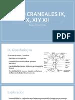 Pares Craneales IX, X, XI y XII