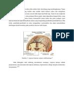 Otak Dilindungi Dari Cedera Oleh Rambut