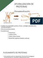 DESNATURALIZACION DE PROTEINAS.pptx