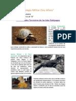 Animales Terrestres Galápagos