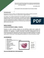 LA CELULA EUCARIOTA Y PROCARIOTA RECONOCIMIENTOS DE ESRUCTURAS.docx