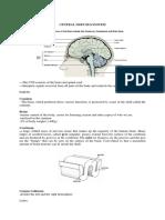 Anatomy of CNS