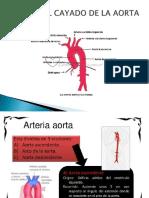 SISTEMA_CIRCULATORIO (1).pptx