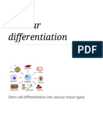 Cellular Differentiation - Wikipedia