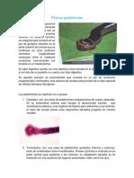 Phylum platelmintes.docx