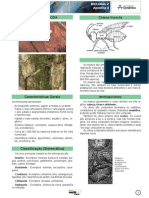 Zoologia - FILO ARTROPODA