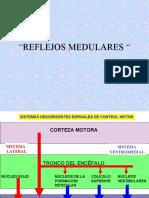 Control Nervioso Sistema Motor ROBLES VANESA NAVARRO KARINA