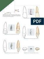 Desenhos Dos Dentes Wheelers
